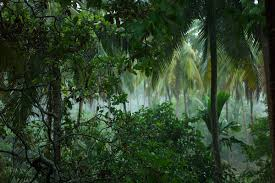 Dominant Plants Of The Tropical Rainforest - from forest floor to canopy the layers of a forest