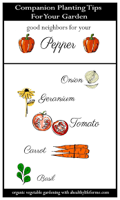 Tips For Planting A Vegetable Garden by Companion Planting Tips For Peppers A Healthy Life For Me