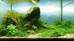 nano aquascape andreas ruppert and aquascaping aqua rebell