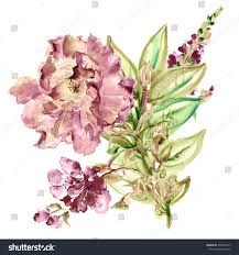 bouquet for wedding flower watercolor background floral illustration pink stock
