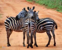 kenya safaris archives