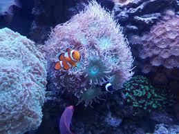 halloween reef transparent background pisces reef fish emporium las vegas nevada u0027s 1 fish u0026 aquaruim