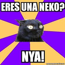Meme Neko - meme anxiety cat eres una neko nya 592040