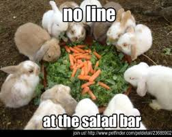 Salad Meme - 25 very funny rabbit pictures