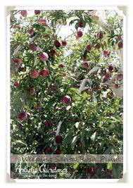 Fruit Tree Garden Layout Orchard Layout Artistic Gardener