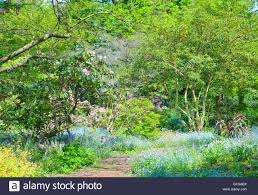stone path in colourful spring english wild garden with flowers