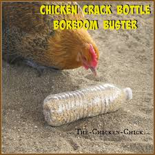 20 winter boredom busters for backyard chickens empty plastic