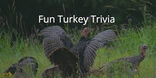 turkey trivia featured 930x465 png