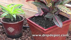 Best Flowers For Small Pots How To Setup A Drip Irrigation System For Containers Potted Plants