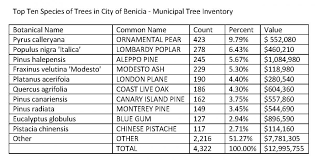 top ten trees in benicia s municipal inventory benicia trees