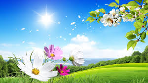 beautiful summer and flowers scenery wallpaper widescreen and hd