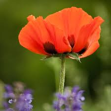 flowers u2014 larry rankin photography