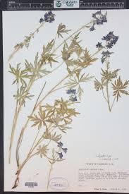 native plants of colorado colorado rare plant guide