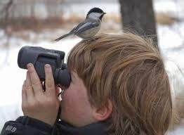 Backyard Wild Birds The Wild Bird Watcher Feeding Backyard Birds In Winter And