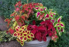 modern planters and pots inspirations plants for outdoor pots and modern planters for a