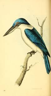 263 best kunstformen der natur birds images on pinterest