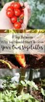 4 top reasons why you should start to grow your own vegetables