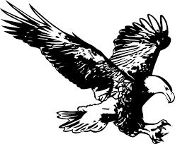 hunting eagle sketch clip art at clker com vector clip art