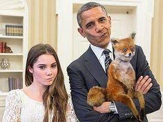 Stoned Fox Meme - top 10 funniest stoned fox memes humor pinterest memes