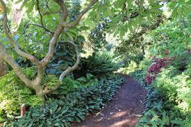 Botanical Garden Sydney by Sydney Garden Inspiration U2013 Janna Schreier Garden Design