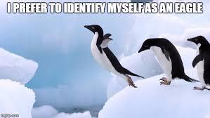 Penguin Memes - flying penguin memes imgflip