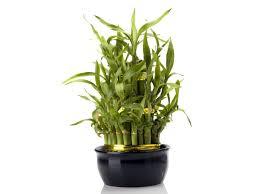 plants for office desk lucky plants for your office desk boldsky com