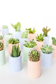 succulent stay cute this that pinterest