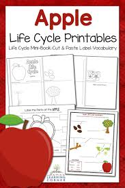 apple life cycle worksheets mamas learning corner