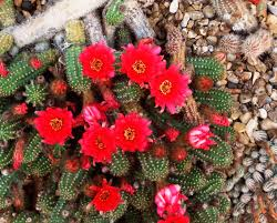 30 best native plant reference the best types of cactus to grow in your garden