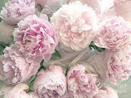peonies bouquet shabby chic pastel pink peonies bouquet pink peony