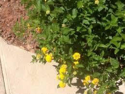 Nice Flowers Nice Flowers Picture Of La Quinta Inn U0026 Suites Phoenix Mesa West
