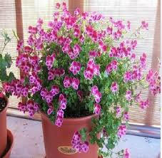 cheap potted garden plants find potted garden plants deals on
