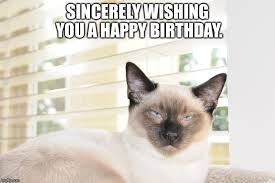 Funny Cat Birthday Meme - sincere cat wishing you a happy birthday imgflip