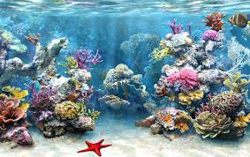 Coral Reefs Of The World Map by Coral Reef Destruction Slideshow