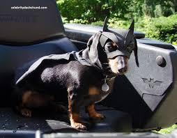 Weiner Dog Halloween Costumes Crusoe Batdog Jpg 1500 1172 Reminds Rocky