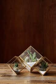 desk cactus best 25 desk plant ideas on pinterest plant decor desk and