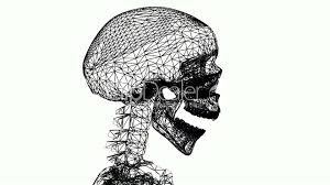 moving of 3d skeleton anatomy human medical body skull biology