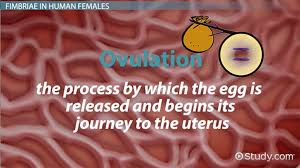 Hindi Meaning Of Resume Cervix Definition Anatomy U0026 Function Video U0026 Lesson Transcript