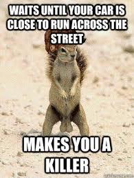 Squirrel Meme - scumbag squirrel memes quickmeme