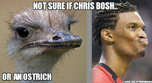 Ostrich Meme - chris bosh ostrich in my kitchen cooking chicken chrisbosh