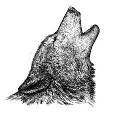 engrave isolated fox illustration sketch linear art stock photo