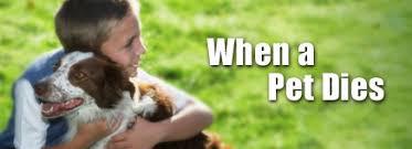 when a pet dies p petdies enhd ar1 jpg