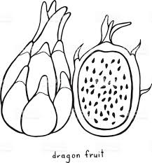 dragon fruit coloring page graphic vector black and white art for