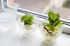 Vegetables You Can Regrow by Windowsill Plants From Kitchen Scraps U2013 How To Regrow Vegetables
