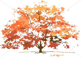 maple tree symbolism fall colors maple tree nature clipart