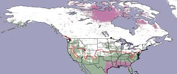 Big Map Of North America by Mapping North America U0027s Wintry Weather Image Of The Day