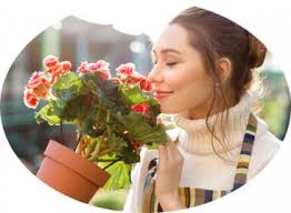 deliver flowers arena flower delivery to mumbai send flowers to mumbai local