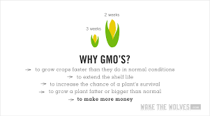 What Are Gmos And Are They Harmful Wake The Wolves