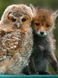 25 baby owls ideas baby owl owls