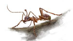 99 million year old u0027unicorn ant u0027 boasted a bizarre prey catching